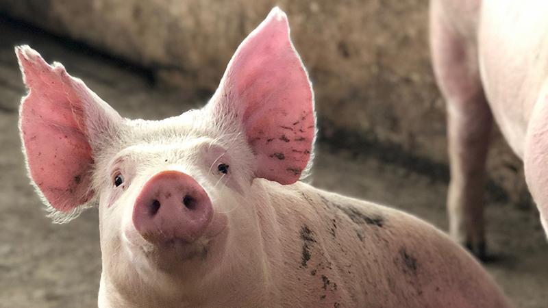 waterbehandeling varkensbedrijf